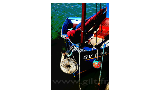 Gilt Paysages Mer N°: M41