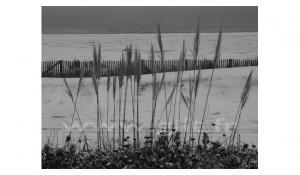 Gilt Paysages Mer N°: M43