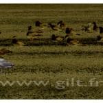 Gilt Paysages Mer N°: M52