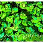 Gilt Fleurs et Plantes N°: FP03