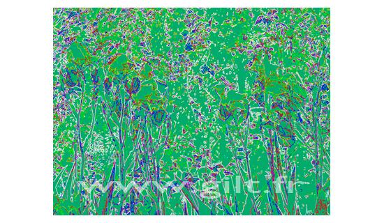 Gilt Fleurs et Plantes N°: FP01
